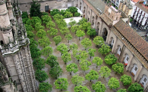 Patio de los naranjos
